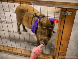 Super Pet Expo April 2018 32 of 117