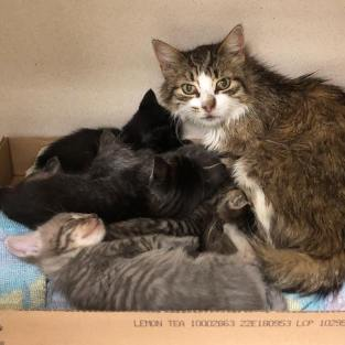 MCSCPCA cats 2