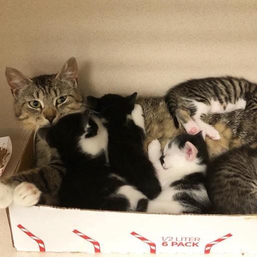 MCSCPCA cats 3