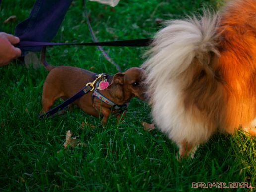Red Bank Dog Days August 2018 1 of 51