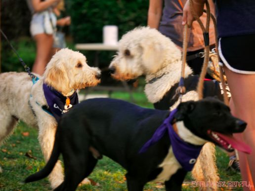Red Bank Dog Days August 2018 8 of 51