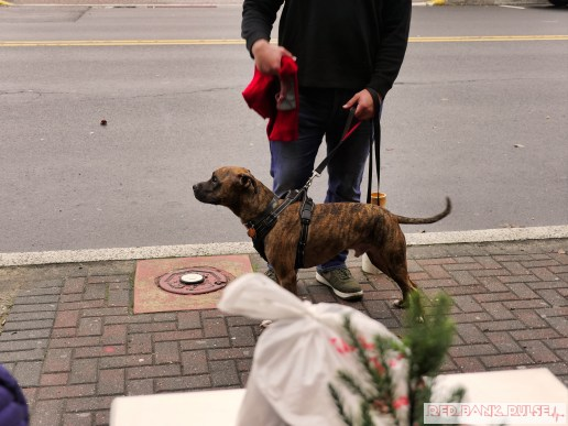 Home Free Animal Rescue with Santa Paws at Bradley Brew Project 35 of 53