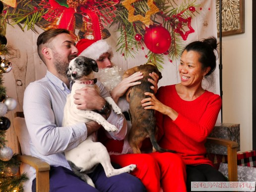 Home Free Animal Rescue with Santa Paws at Bradley Brew Project 43 of 53