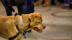 monmouth county spca wine & wag at grape beginnings winery 3 of 67
