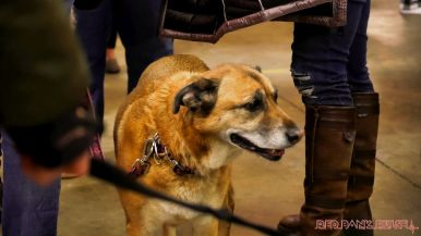 monmouth county spca wine & wag at grape beginnings winery 30 of 67