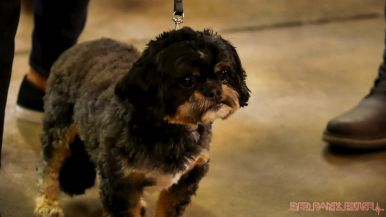 monmouth county spca wine & wag at grape beginnings winery 8 of 67