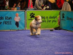 Super Pet Expo 2019 Day 2 73 of 96