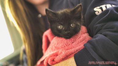 Catsbury Park Cat Convention 2019 158 of 183