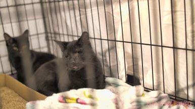 Catsbury Park Cat Convention 2019 160 of 183