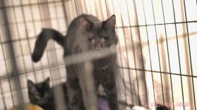 Catsbury Park Cat Convention 2019 161 of 183