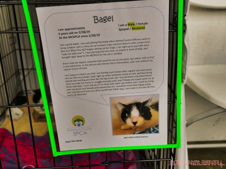 Catsbury Park Cat Convention 2019 26 of 183
