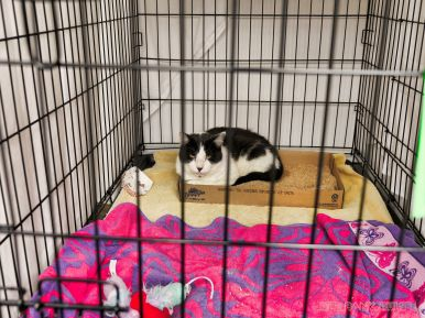 Catsbury Park Cat Convention 2019 27 of 183