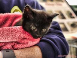 Catsbury Park Cat Convention 2019 32 of 183