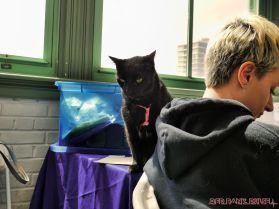 Catsbury Park Cat Convention 2019 36 of 183