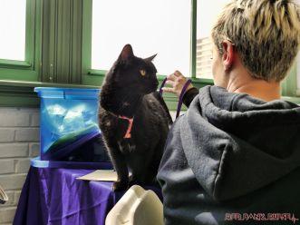 Catsbury Park Cat Convention 2019 37 of 183
