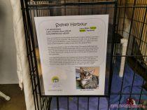 Catsbury Park Cat Convention 2019 42 of 183