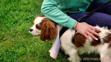 Monmouth County SPCA dog walk & pet fair 2019 29 of 95