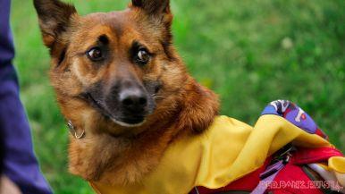 Monmouth County SPCA dog walk & pet fair 2019 33 of 95