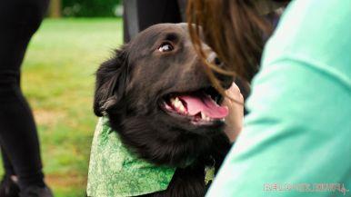 Monmouth County SPCA dog walk & pet fair 2019 37 of 95