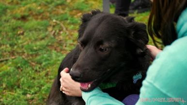 Monmouth County SPCA dog walk & pet fair 2019 39 of 95