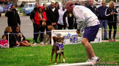 Monmouth County SPCA dog walk & pet fair 2019 46 of 95