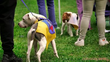 Monmouth County SPCA dog walk & pet fair 2019 51 of 95
