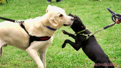 Monmouth County SPCA dog walk & pet fair 2019 53 of 95