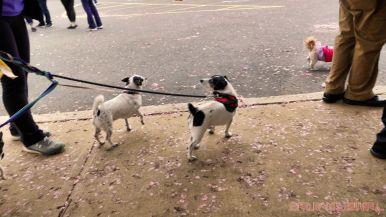 Monmouth County SPCA dog walk & pet fair 2019 62 of 95