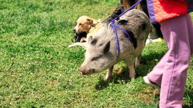 Monmouth County SPCA dog walk & pet fair 2019 65 of 95