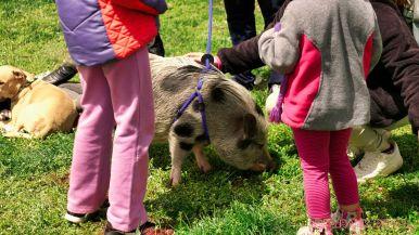 Monmouth County SPCA dog walk & pet fair 2019 66 of 95