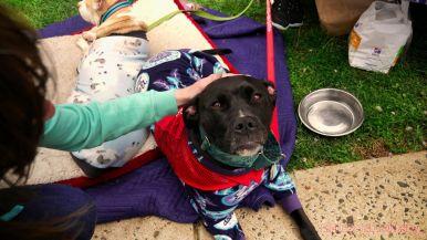 Monmouth County SPCA dog walk & pet fair 2019 7 of 95