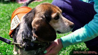 Monmouth County SPCA dog walk & pet fair 2019 86 of 95