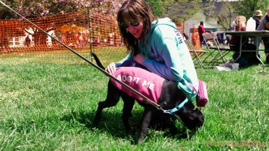 Monmouth County SPCA dog walk & pet fair 2019 90 of 95