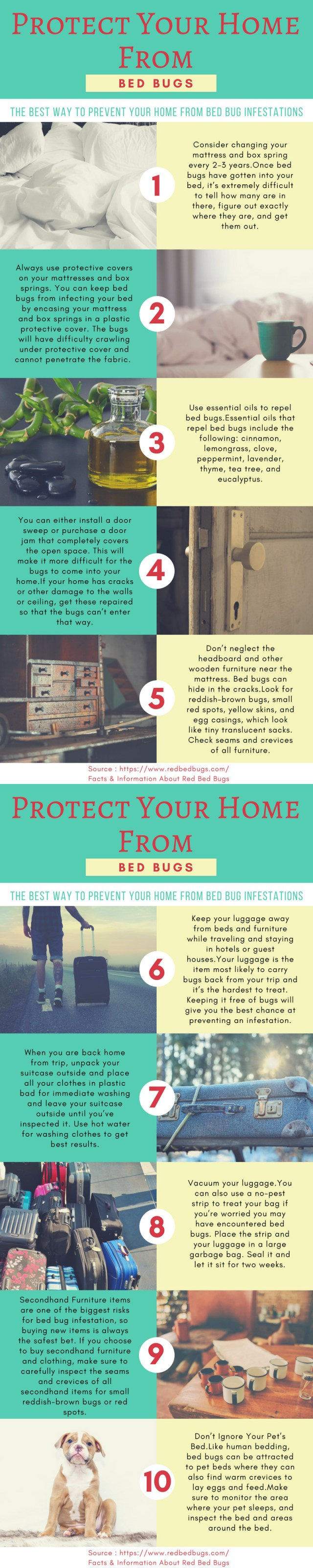 Red Bed Bugs Prevention Tips Infographic
