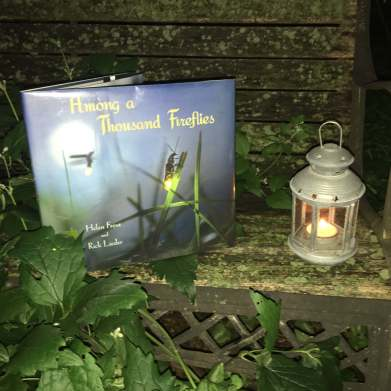 midsummer reading picture book