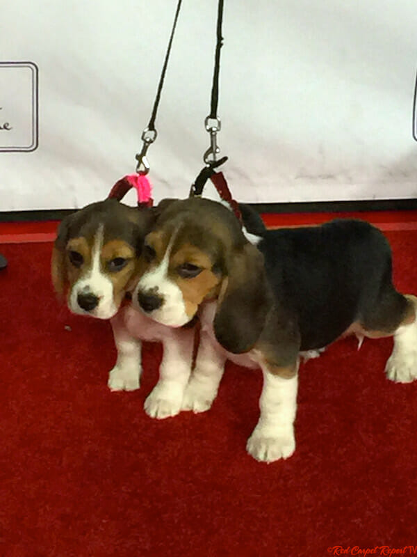 One Christmas Eve.Puppies At The Hallmark Channel S La Premiere Event Of One