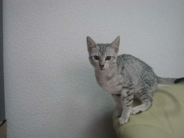 Roztomilý nahé mačička pics