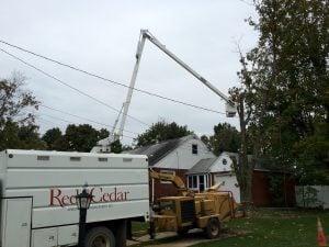 arborist site inspection