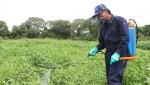 curso fitosanitario 25 horas basico palma de mallorca