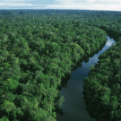 NGOs welcome European Commission decision to keep forests out of the carbon market