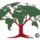 Woods Hole Research Centre: a reliable advisor on REDD?