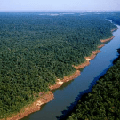 World Bank approves R-PIN for Paraguay despite lack of consultation with Indigenous Organisations