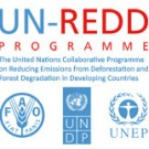 Left UN-said: the flawed analysis behind UN-REDD