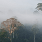 Canopy Capital's Iwokrama, Guyana, project shrouded in secrecy; indigenous residents not consulted