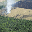 New research shows price on carbon not enough to save rainforests