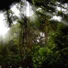 Community Forests and REDD in Indonesia
