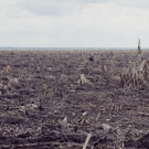 FCPF's poster child would reward forest destroyers in Indonesia