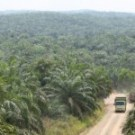 Mixed messages on the Norway-Indonesia billion dollar forest deal