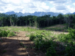 Tractor-cleared secondary forests, Ban Pak Veng.