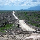 Rainforest Action Network urges robust moratorium in Indonesia